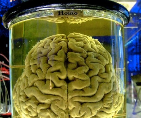 Brain in a Jar - Brain in the Vat - 10 Mind-Blowing Theories That Will Change Your Perception of the World